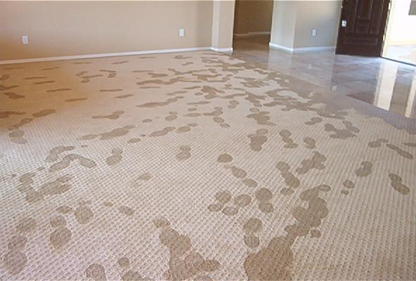 Basement carpeting what you need to know dover rugdover rug for Best carpet for basements